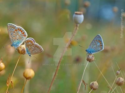 Heavenly butterflies by Morgan-Lou