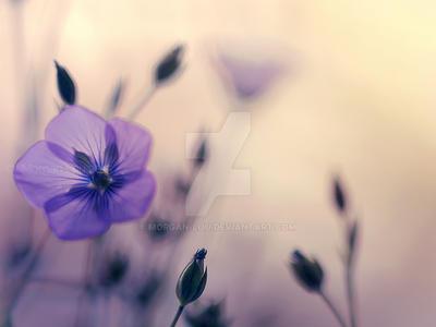 Heavenly blue by Morgan-Lou
