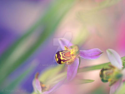 Wild orchid by Morgan-Lou