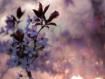 In cherry blossoms shade by Morgan-Lou