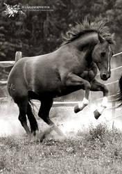 Mustang At Heart by jillsahner