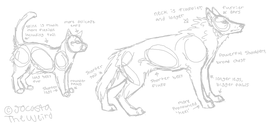 The difference between wolf and cat anatomy by homeqrown on DeviantArt