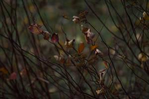 Late Autumn Leaves by danglara