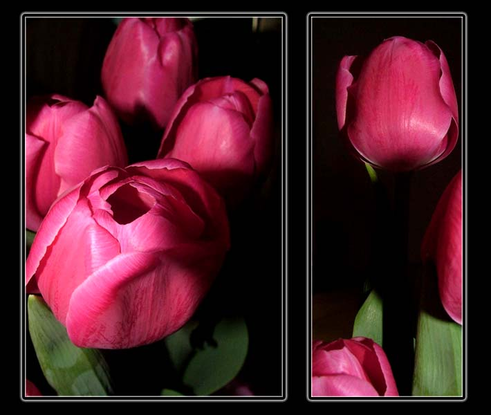 Tulip Collage2 by smerfette