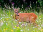 Deer 9 by lica20