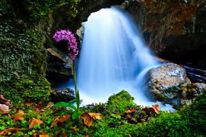 Waterfall flowered