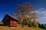 Old hut Bukovina