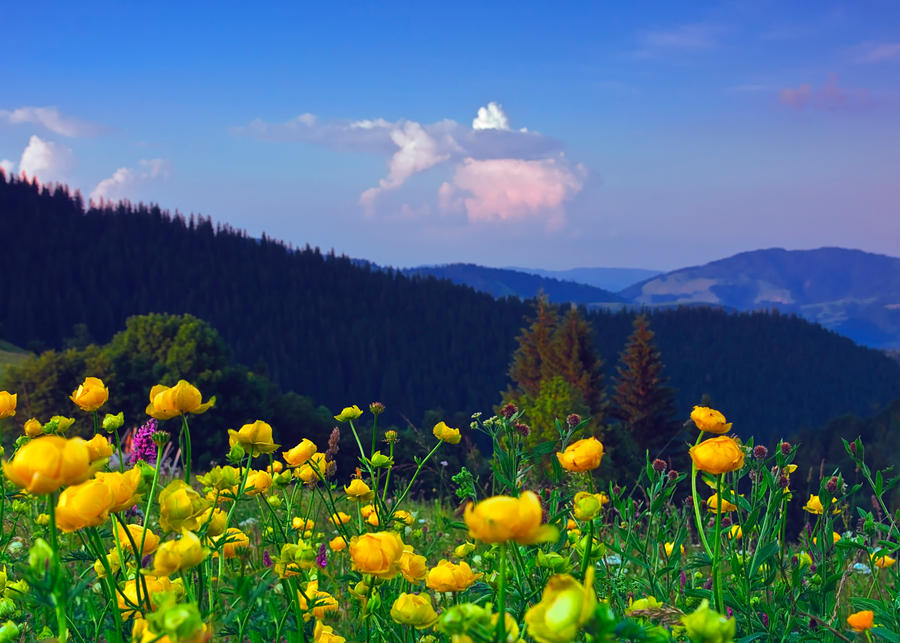 Field of flowers by lica20