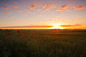 Summer Sunrise by lica20