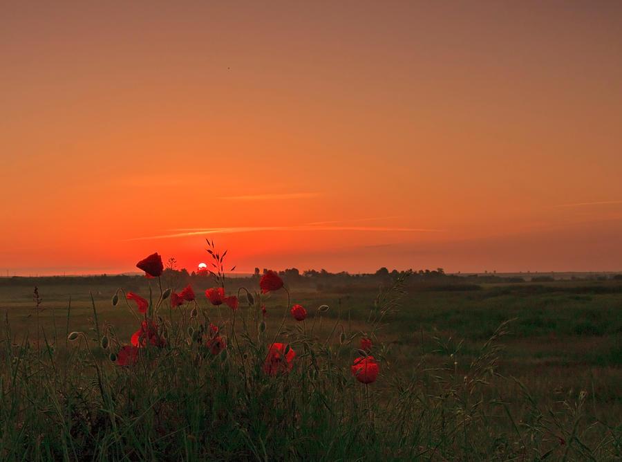 Sunrise Fire by lica20