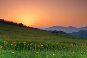Bukovina summer by lica20