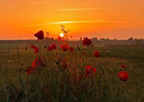Summer Sunrise. by lica20