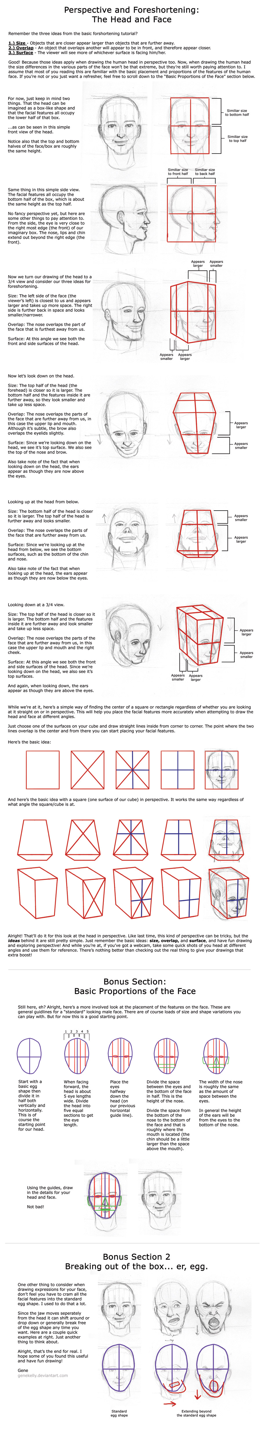 Tues 4: Head in Perspective