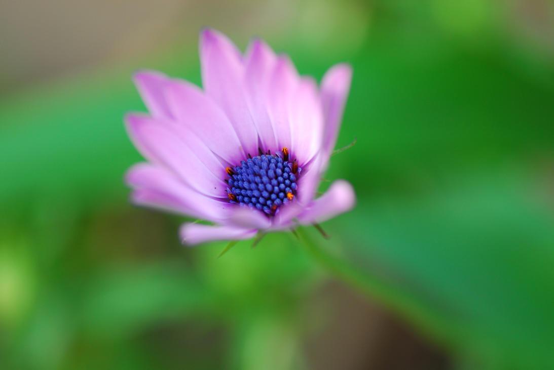 Solo una flor... by Edge-Suizo