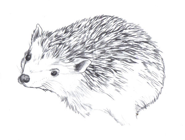 Line Drawing Hedgehog : Hedgehog line by ltatt on deviantart
