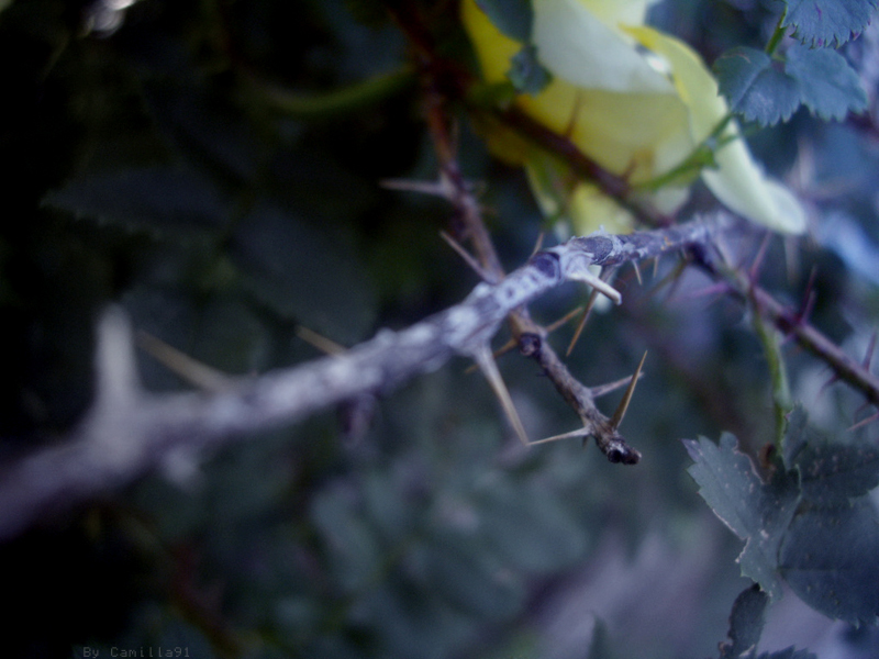Thorns In The Dark