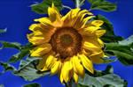 Sun on the Sunflower