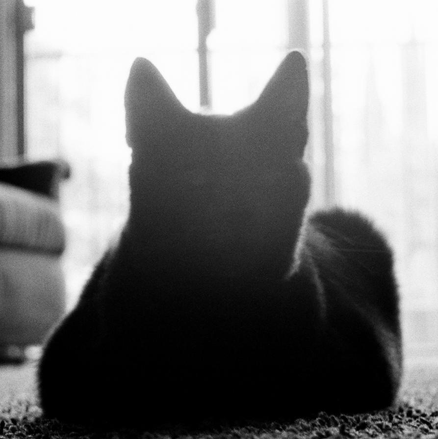 Fuzzy Silhouette by AureliusWalker