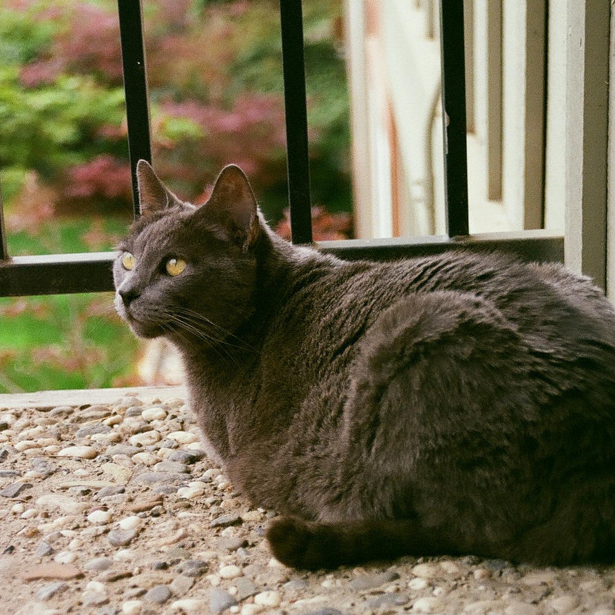 Patio Cat by AureliusWalker