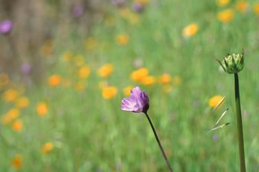 Typical Flower Bokeh by AureliusWalker