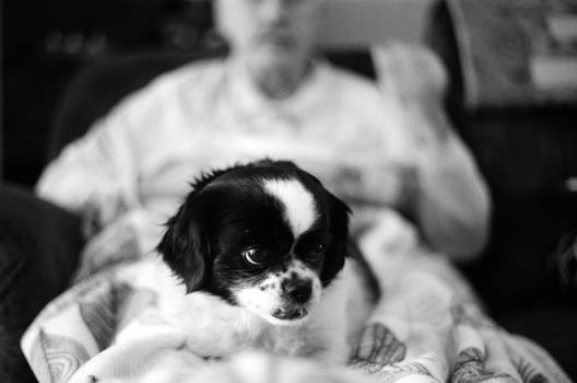 A Dog and Her Old Man