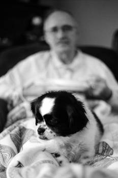 A Dog and Her Old Man 2