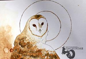 Coffee owl closeup