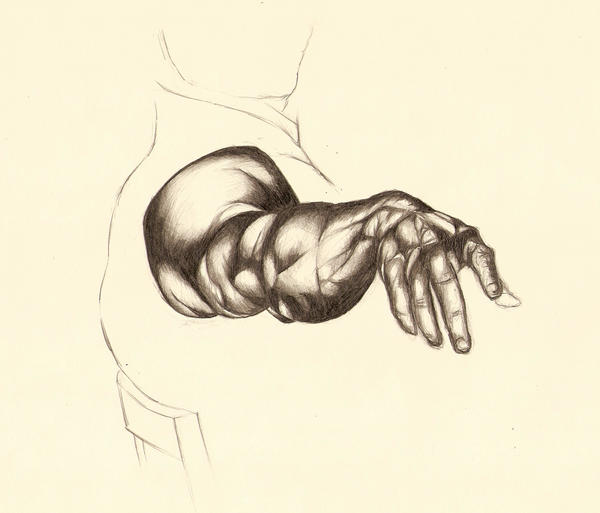 Anatomy by Yesitsrob on DeviantArt