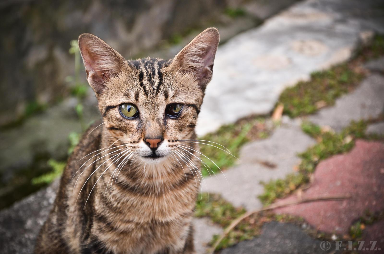 nicole scherzinget cats
