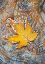 Maple Leaf Study II by angelahedderick