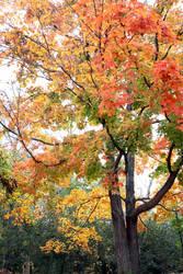 Autumn Once Again 1