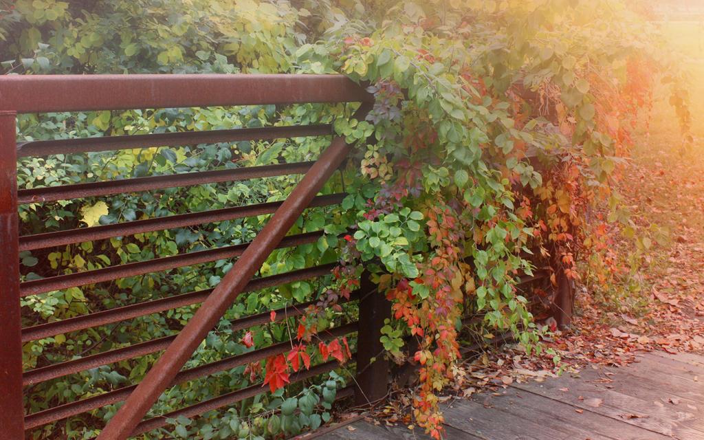 Secret Gate by photorip