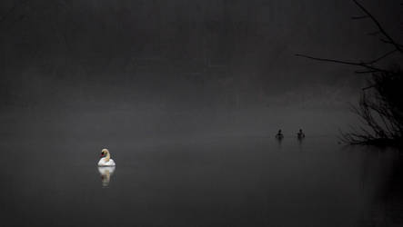 Winter's Mist by photorip