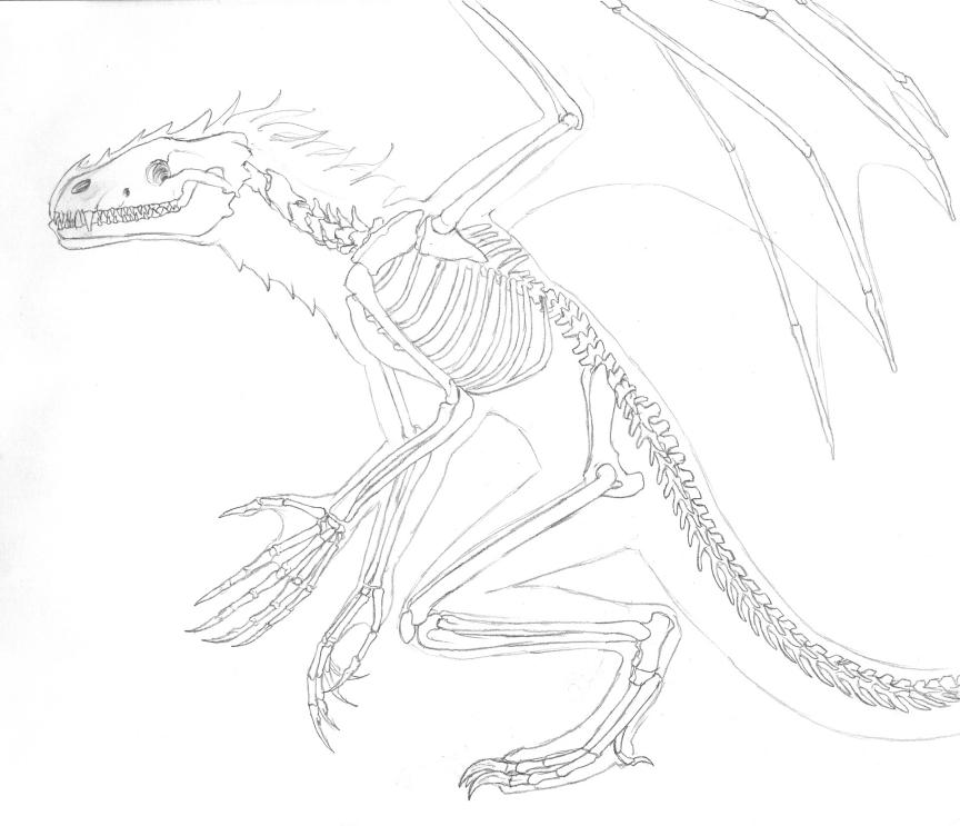 Dragon Skeleton by shadowfire-x