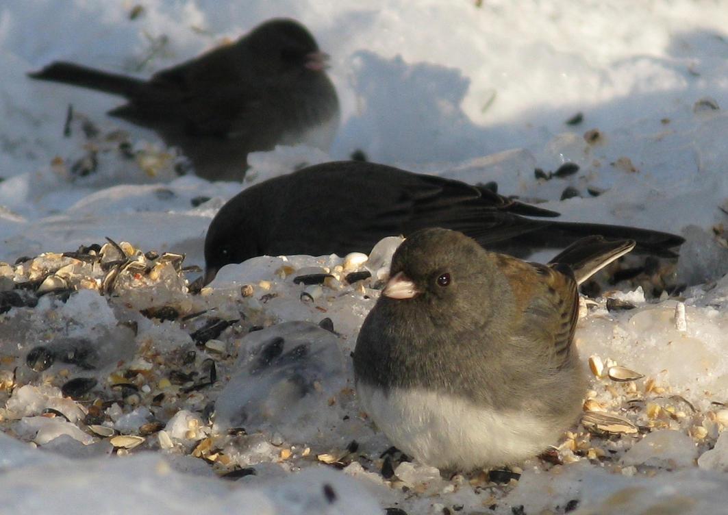 Bird Buffet by shadowfire-x