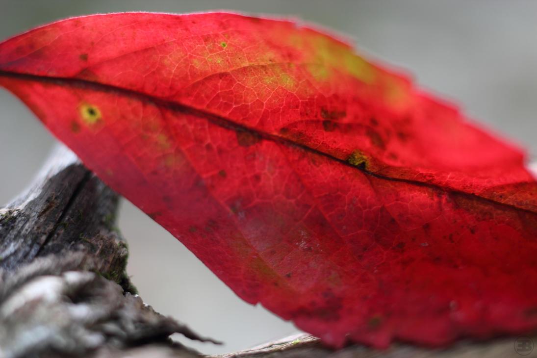 Crimson on Bone by shadowfire-x