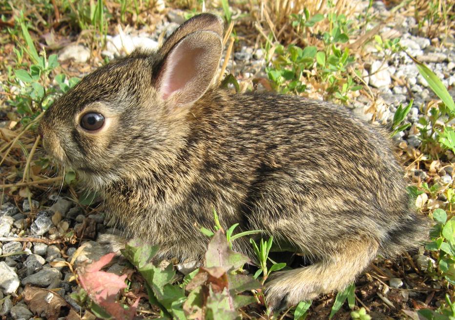 Cute Little Bunny by shadowfire-x