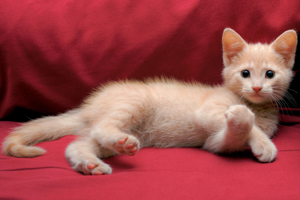 Everybody Loves Kittens by Zedarean
