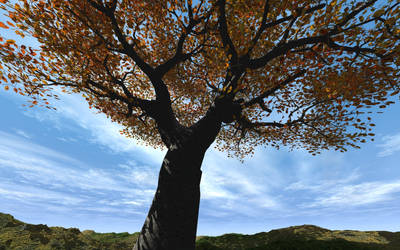 A Lone Cherry Tree