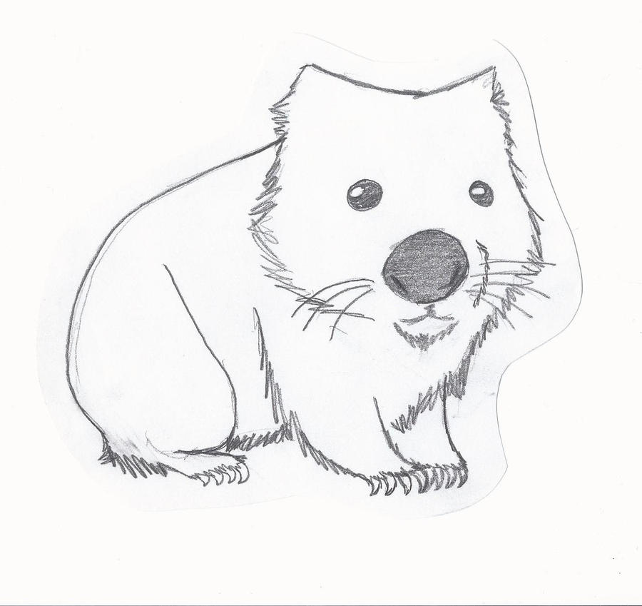 Wombat Drawing Wombat by izzybree97 o...