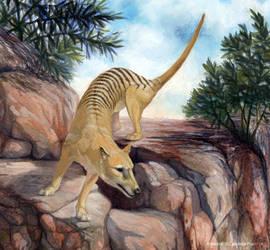 Thylacine- (detail) by YemaYema