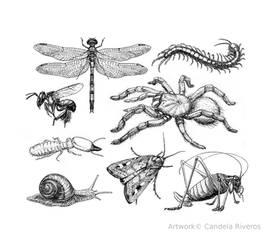 Assorted Ivertebrates
