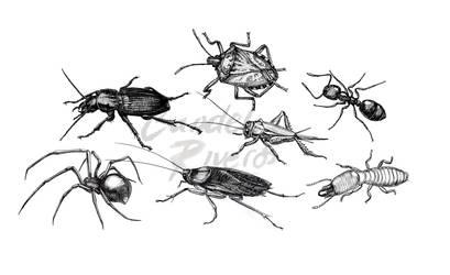Invertebrates3