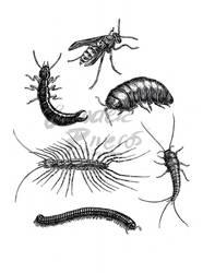 Invertebrates 4