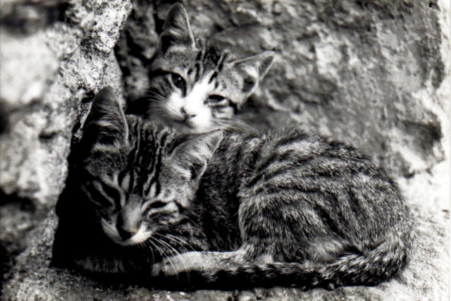 http://fc02.deviantart.net/fs10/i/2006/159/9/8/Cats_by_Ghuga.jpg