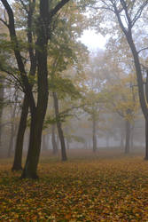 foggy morning 1 by queenofdandelions