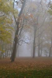 foggy morning 2 by queenofdandelions