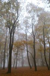 foggy morning 3 by queenofdandelions
