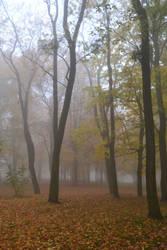 foggy morning 4 by queenofdandelions