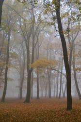 foggy morning 5 by queenofdandelions
